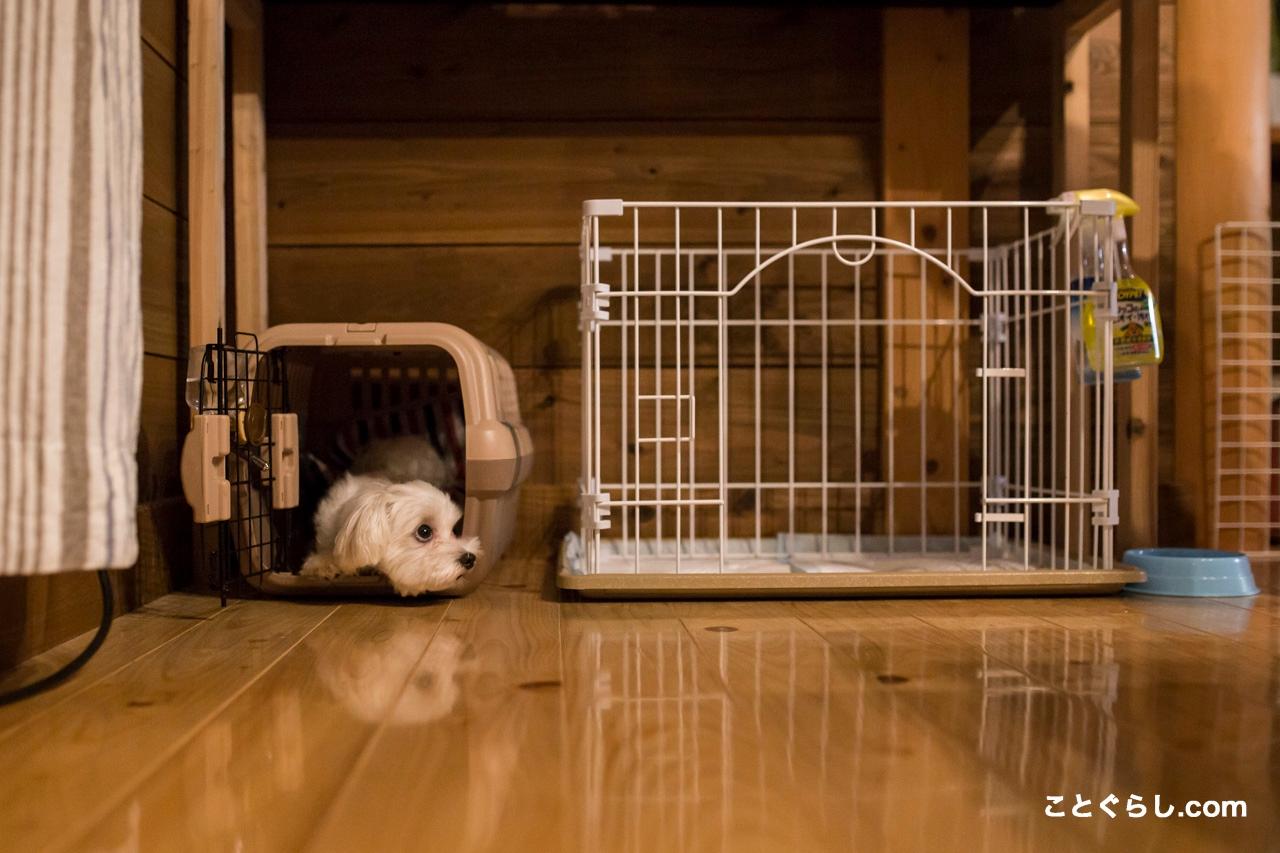 子犬寝る場所